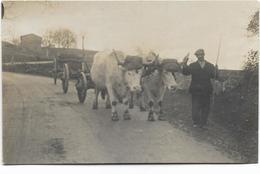 42 - Carte-photo Format Carte De Visite - Emile LACROIX Et Ses Boeufs - Photo TRONCY à BELMONT - Loire. - Belmont De La Loire