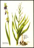D0969 - Leischner Künstlerkarte - Pro Juventute - Kinderdorfvereinigung Salzburg - Medicinal Plants
