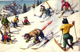 Katze, Ski Fahrende Katzen, Verlag Künzli, 1959 - Chats