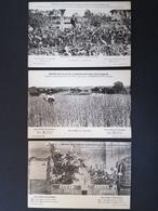 Essai Du Sulfate D'ammoniaque. Betteraves. Blé D'Alsace. Rosiers. - Cultivation