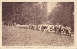 Vosges (88) - Tronc Séculaire Sortant De La Forêt - Non Classés