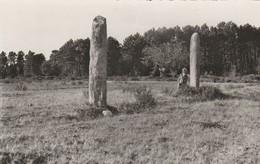 Collobrières (Var) - Les Menhirs De Lambert - Collobrieres