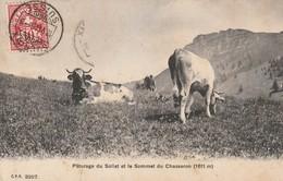 Pâturage Du Soliat Et Le Sommet Du Chasseron - Vâches - NE Neuchâtel