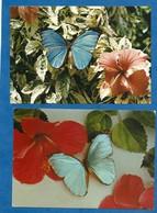 Lot De 2 CP Faune Et Flore De Guyane Papillon Hibiscus Ecrite Non Timbrée - Guyane
