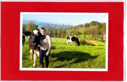 CP, Productrice De Lait De Vache Dans Les Pyrénées-Atlantique - Mucche