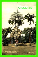 DOMINIQUE, ANTILLES - TALLIPOT PALMS, DOMINICA BY MASTERVILLE - TRAVEL IN 1932 - - Dominique