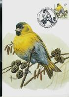CM Du N° 2665 Tarin Des Aulnes  -  Siskin  Obl.: Saint-Mard (6762)  05/10/1996 - 1985-.. Pájaros (Buzin)