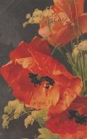 Klein Catharina  -  Ediz.  Wenau  Pastell  ,  N°  516 - Klein, Catharina