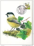 CM  Mésange    Boreau   N°2695  Obl: 03/03/1997  Berneau;  Oiseau; Birds; Vogels   Buzin - 1985-.. Oiseaux (Buzin)
