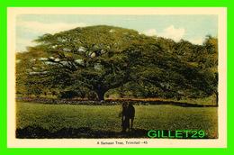 TRINIDAD & TOBAGO -  A SAMAAN TREE -  DOMINION CREST - PECO - - Trinidad