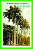 TRINIDAD & TOBAGO - AN AVENUE OF ROYAL PALMS AT THE TRINIDAD COUNTRY CLUB -  DOMINION CREST - PECO - - Trinidad