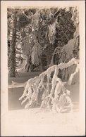 AK Urwald Paradies Gau Sudetenland, Gelaufen 1943 - Sudeten