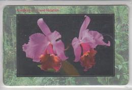 CZECHIA 1999 FLOWER ORCHID CATTLEYA CV. IRENE HOLGUIN - Flores