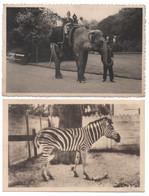 9 X Antwerpen 1928 ZOO DIERENTUIN éléphant Girafe Leopard Chèvre Zèbres Attelage Enfants Span Kinderen CPA PHOTO Anvers - Antwerpen