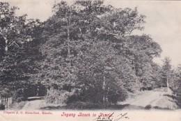 4770235Ingang Bosch Te Ruurlo. – 1908. (linksonder Een Klein Vouwtje) - Netherlands