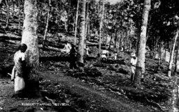 SRI LANKA (Ceylon) - Rubber Tapping - RPPC - Sri Lanka (Ceylon)