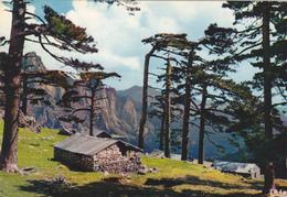 Corse Du Sud,col De Bavella,et Foret,au Coeur De Alta Rocca,1218m,FALAISE,MAQUIS,CABANE - Non Classés