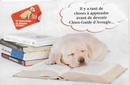 Chien Guide D'aveugle  -  Carte Union Nationale Des Aveugles De Déficients Visuels - Cani