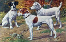 Cpa POINTER - O.G.Z.L. 180/1114 - Honden