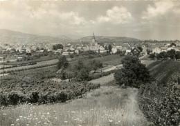 WINTZENHEIM VUE GENERALE - Wintzenheim