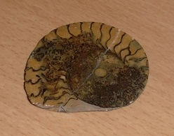 RARITÄT - FOSSIL … Versteinerte Schneckenmuschel Geschliffen Und Poliert, Wunderschönes Einzelstück, 7,5 X 6,3 X 1 Cm - Fossilien