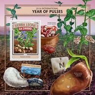 Sierra Leone 2016  Year Of Pulses ,beans - Sierra Leone (1961-...)