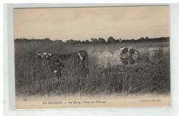 41 EN SOLOGNE AUX CHAMPS N° 191 LABOUR ATTELAGE HERSE AGRICULTURE PAYSANS - France