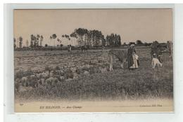 41 EN SOLOGNE UN ETANG VACHES AU PATURAGE N° 166 AGRICULTURE ANIMAUX - France