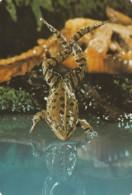1989 Pocket Calendar Calandrier Calendario Portugal Animais Selvagens Râ Sapo Batraquio - Tamaño Grande : 1981-90
