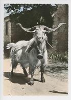 Chèvre, Bouc (cloche) Les Alpes Pittoresques Cp Vierge N°45 éd Mar - Animals