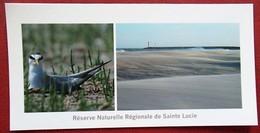 11 - Port-la-Nouvelle - Réserve Naturelle De Sainte Lucie - Sterne Naine - Port La Nouvelle