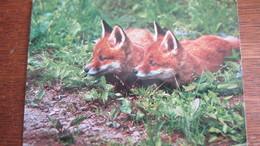 RENARDS - Tierwelt & Fauna