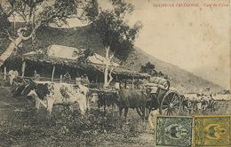 Nouvelle Caledonie New Caledonia Case De Colon Station à Houmac . Attelage De Boeufs - Nuova Caledonia