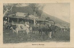 Nouvelle Caledonie New Caledonia Case De Colon Station à Houmac . Attelage De Boeufs. Edit Raché - Nuova Caledonia