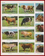 Bovidé. Vache. Taureau. Divers Races: Vache Normande, Taureau Pie Rouge, Flamand, Blonde Des Pyrénées ... Larousse 1960. - Documents Historiques