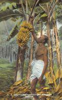 Sri Lanka - Singhalese Man Cutting Bananas - Publ. The Coop Ltd. 27 - Sri Lanka (Ceylon)