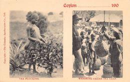 Sri Lanka - Tea Plucking - Weighing Green Tea Leaf - Publ. The Colombo Apothecaries - Sri Lanka (Ceylon)