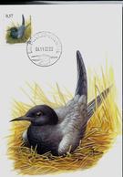 CM Du N° 3136 Guifette Noire  -  Zwarte Stern  Obl. Bruxelles - Brussel  04/11/2002 - 1985-.. Vogels (Buzin)