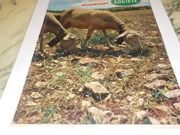 ANCIENNE  PUBLICITE TERRE ODORANTE  SOCIETE ROQUEFORT 1960 - Posters