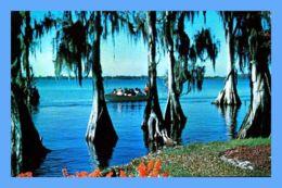 CPSM - Cypress Gardens - Bradenton (Floride) - 121. Fascinating Silouhettes Of Century Old Cypress Trees - Bradenton