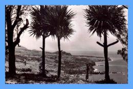 CPSM - Ile De La Reunion - Saint-Joseph - Les Pendanus - Reunion