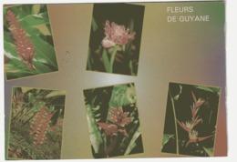 AL53 Guyane Fleurs De Guyane (CPSM) (Guy Delabergerie 739,etat Correct) - Autres