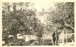 Apiculture Abeilles Ruches Rucher , Carte Photo , * LC 376 29 - Fotografia