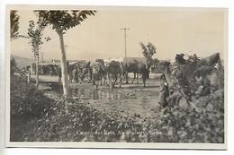 Real Photo Postcard, Syria, Alexandretta, Camel Caravan At Rest. Merchants, Travellers, Pilgrims. - Syrie