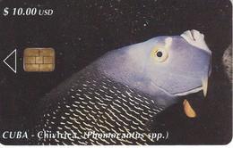 094 TARJETA DE CUBA DE UN PEZ CHIRIVICA  (FISH) - Cuba