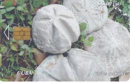 Nº 209 TARJETA DE CUBA DE EQUINODERMOS FOSILES (rozada) - Cuba