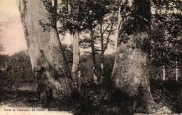 FORET DE TRONCAIS - LE PENDU RESERVE SECULAIRE - France