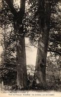 FORET DE TRONCAIS - RICHEBOUT - LES JUMEAUX 450 ANS - France