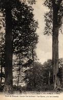 FORET DE TRONCAIS - LE ROND DE BUFFEVENT LES EPOUX 410 ANS - Autres Communes