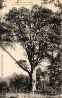 FORET DE TRONCAIS - VILLEJO - LE SOLITAIRE 400 ANS - Autres Communes